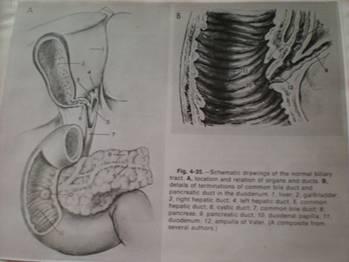 a csípőízületi betegség legfontosabb dologáról)