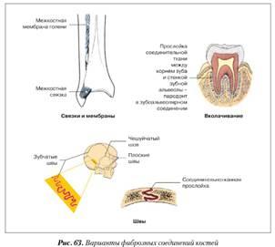 ízületek és csontok előkészítése