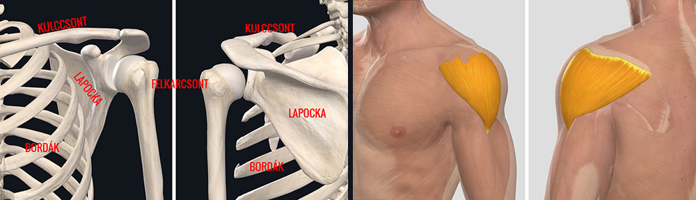 gyógyítja a vállízület ízületi gyulladását)
