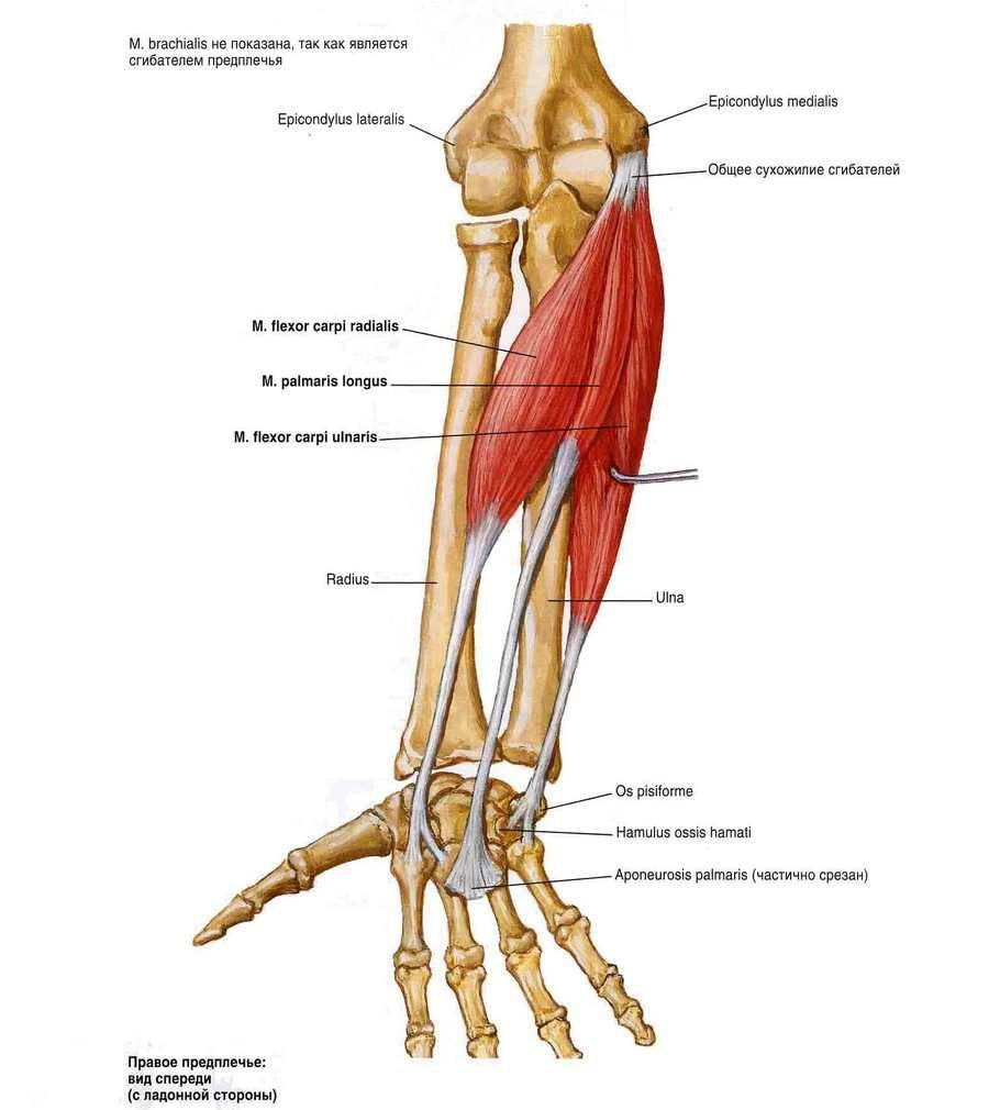 az emberi vállszíj artrózisa