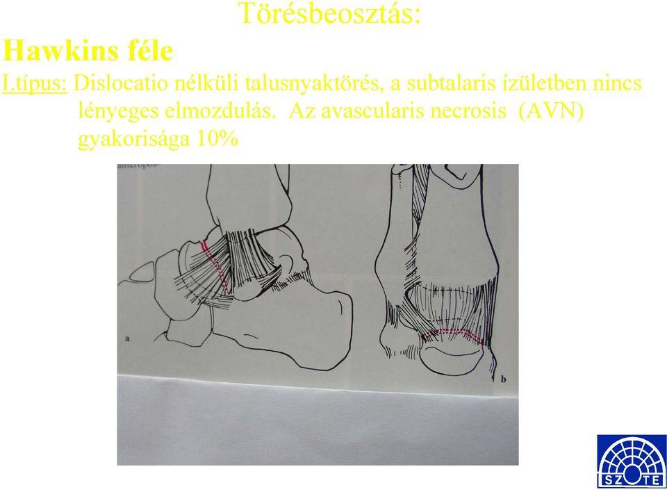 Boka szerkezete és betegségei