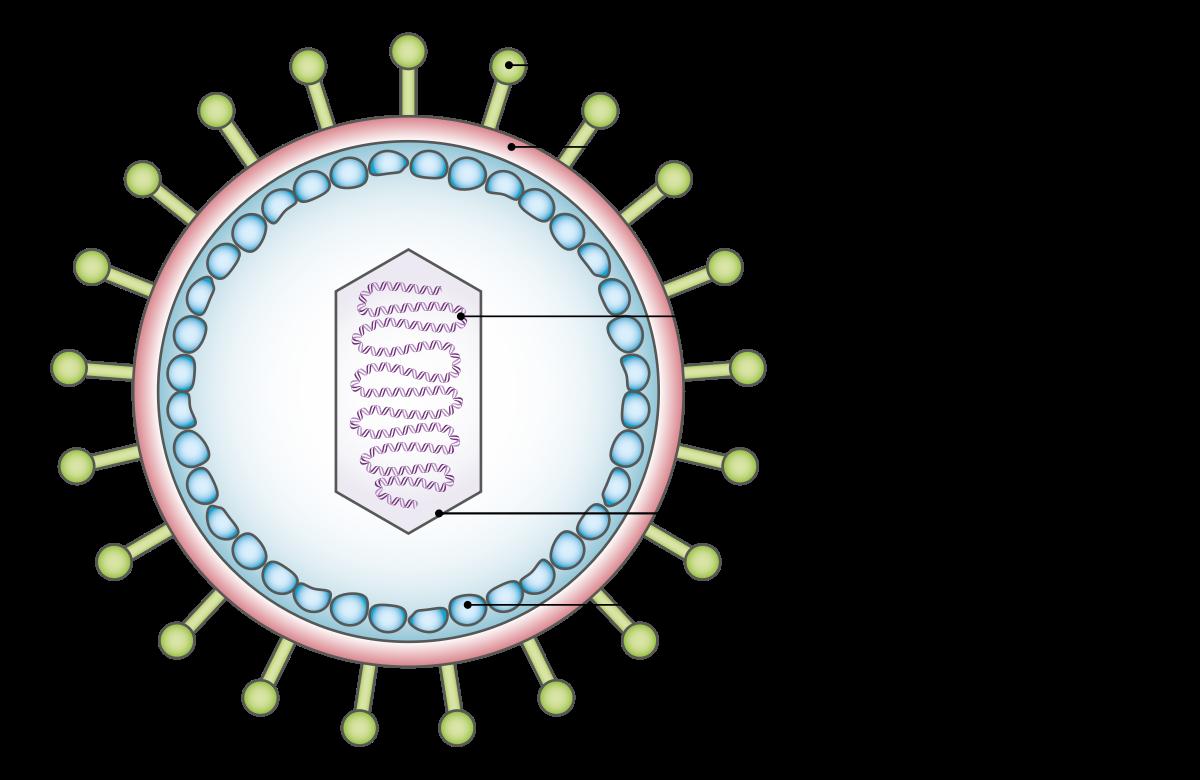 kötőszöveti diszplázia aminosavkezelése)