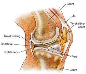 térdízület ízületi fájdalomcsillapító kezelése