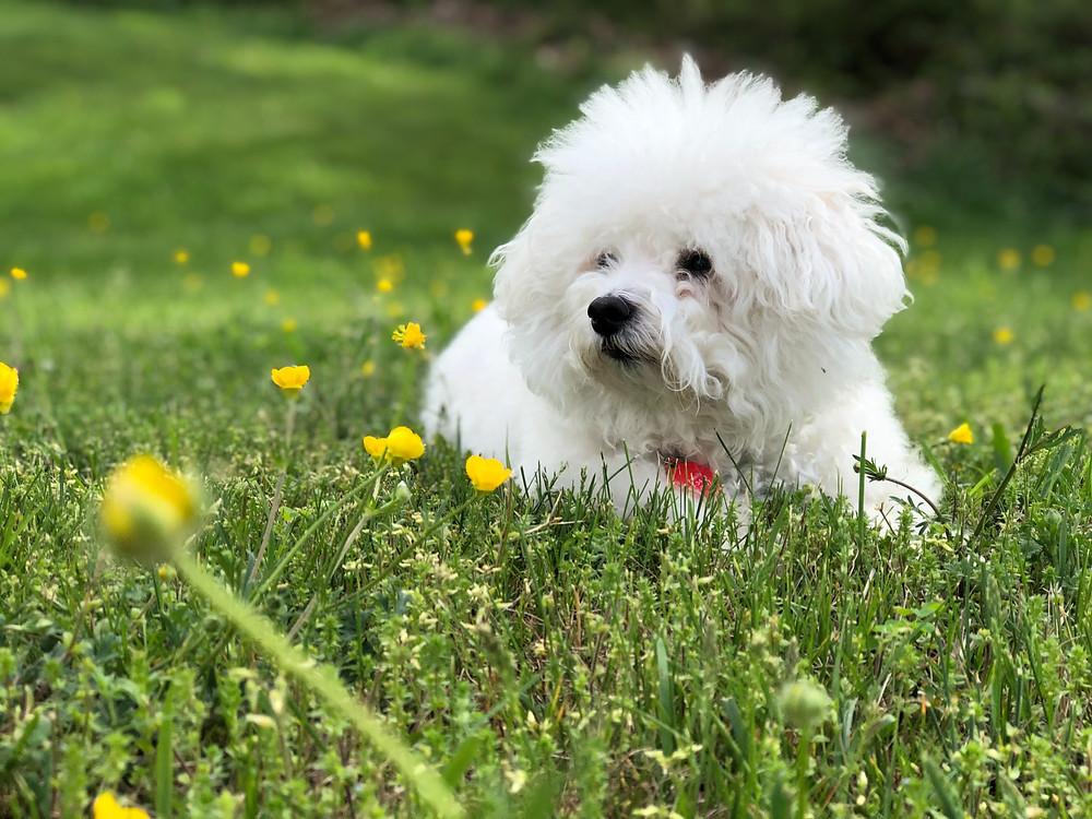 kutya szőr ízületi fájdalmak esetén