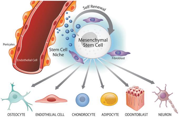 őssejtek kezelése)