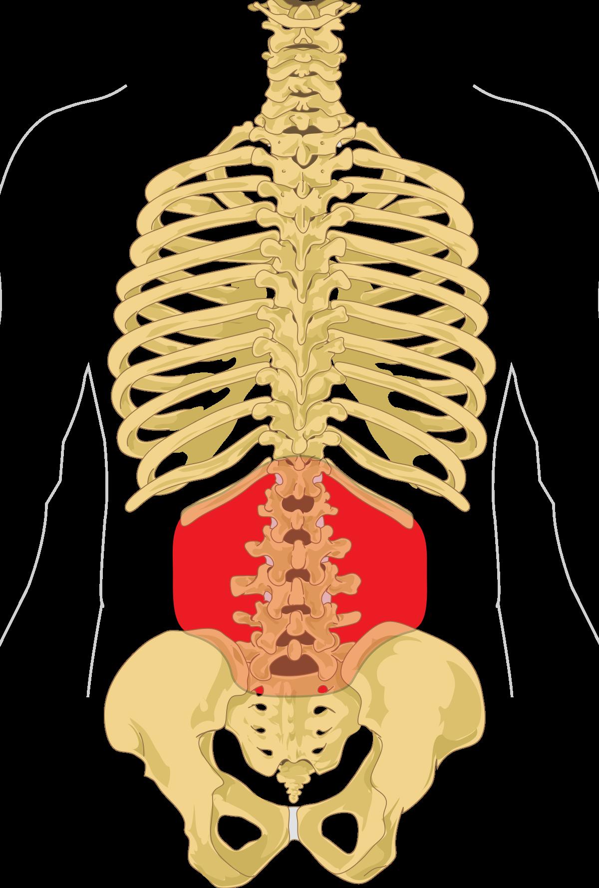 a mellkasi gerinc közötti csigolyák csontritkulása)