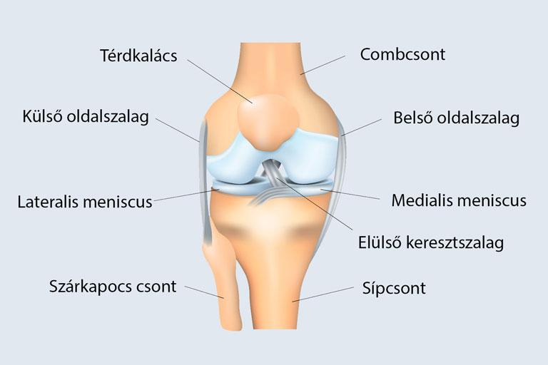 fájdalom és instabilitás a térdízületben)