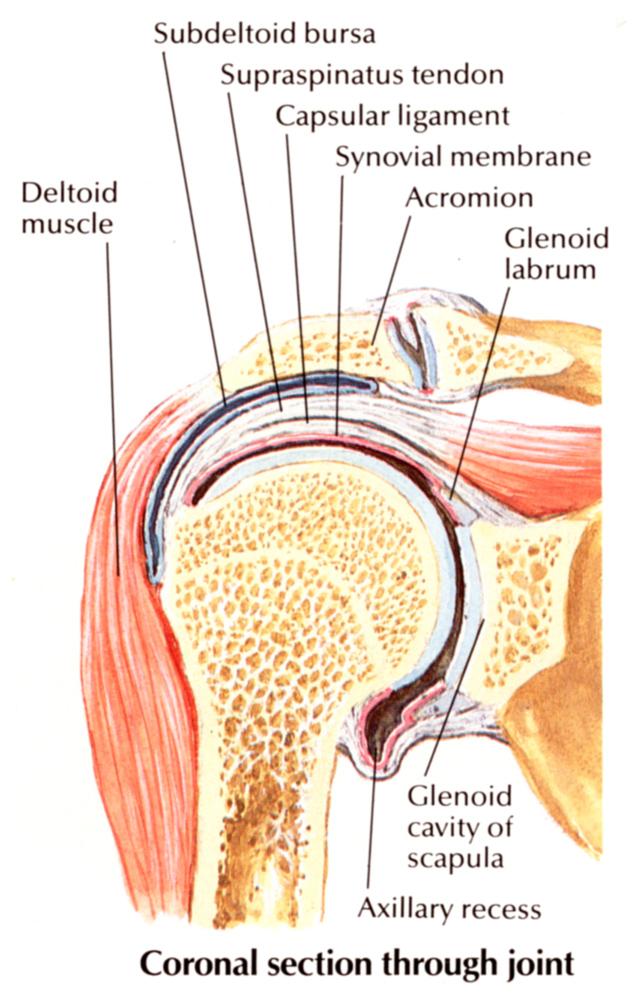 vállízület fájdalom szerkezete)