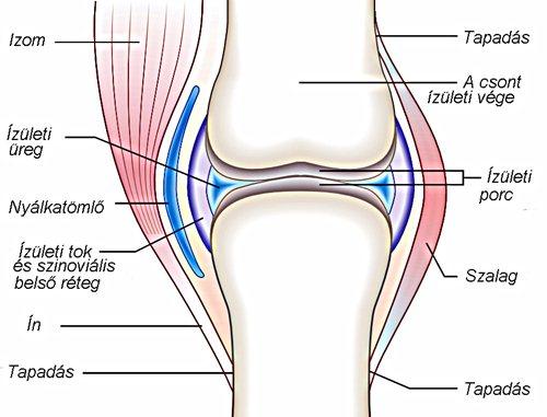 gyakorlatok deformáló ízületi gyulladás kezelésére)
