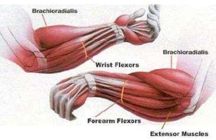 ízületi fájdalom alkar az emberi vállszíj artrózisa