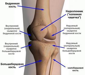 ízületi fájdalom az emelőemelőkben a porc kötőszövetének szerkezeti jellemzői