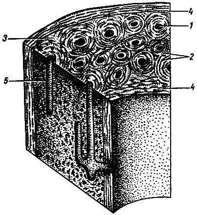 Doppelherz System Kollagen Plus Ampulla