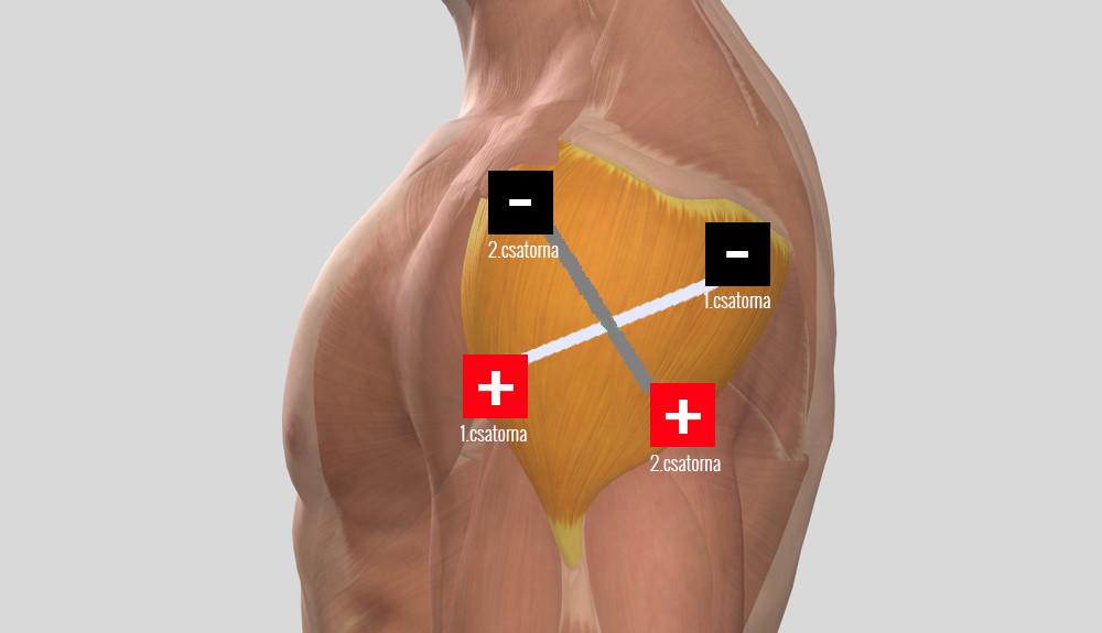 gyógyszerek artrózisa a vállízület kezelése)