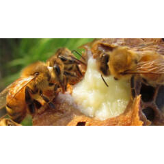 méhészeti kezelés
