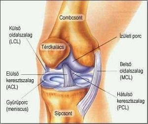 kétfokú térdízületi artrózis a 2. fokú kezelés során)