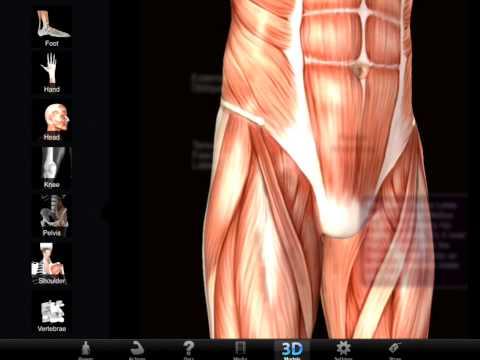 Farokcsont fájdalom 6 oka, 3 tünete és 12 kezelési módja [teljes leírás]
