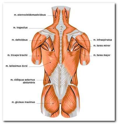 ízületi fájdalom skoliozissal gyógyszer az ízületek és a hát alsó részén