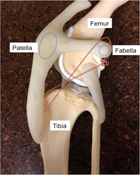fabella térdízület kezelése