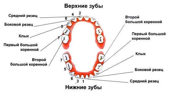 kenőcs az orrfájdalom fájdalmáért)