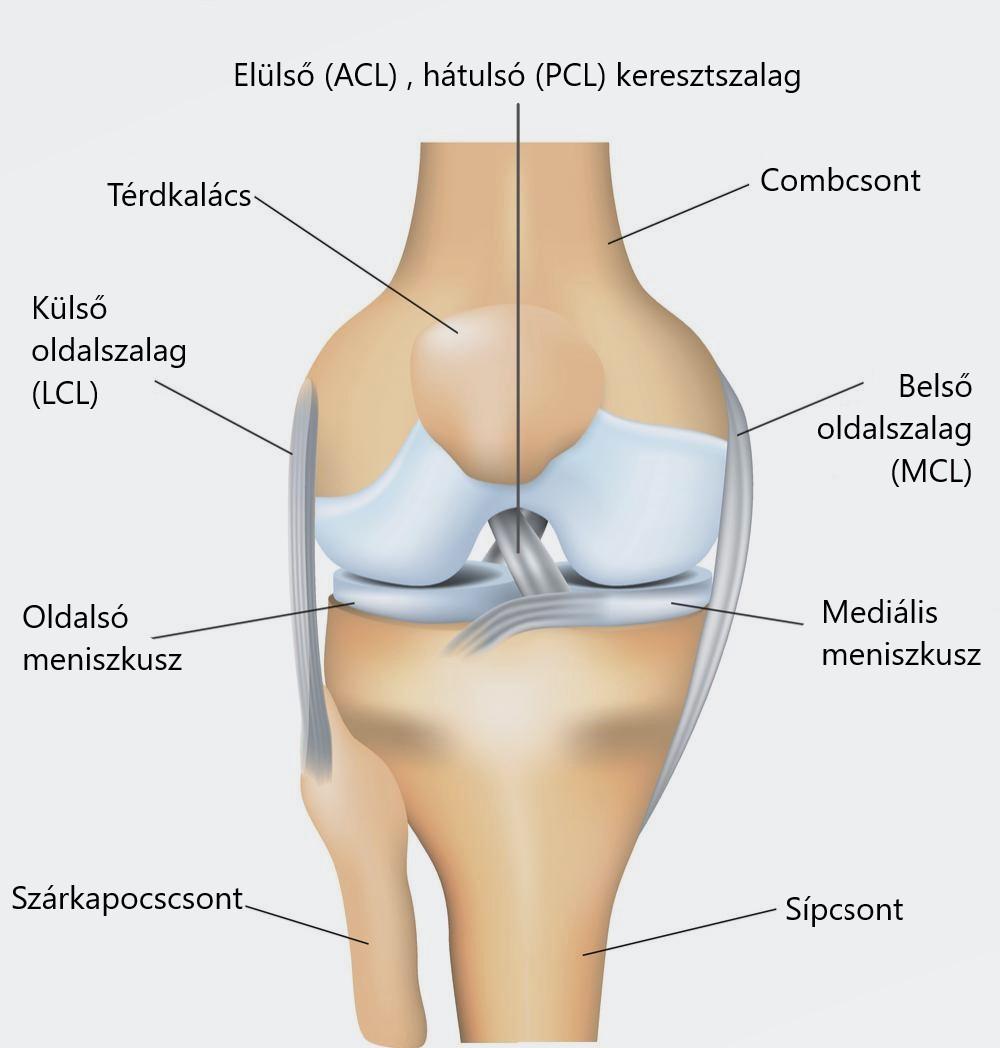 Meniscus sérülések kezelése