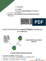 A csípőízület fejlődésének normája és patológiája
