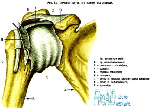 deformáló osteoarthrosis a vállízület ii. fokozatában)