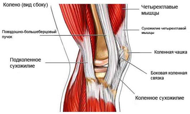 Térdfájdalom a térd belső oldalán