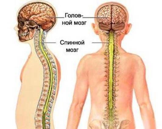 milyen kenőcsök használhatók az osteochondrozishoz a térd artrózisának diagnosztizálása és kezelése