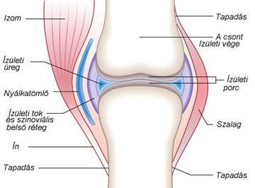 fájó térdízületi gyulladás vándorló fájdalom a boka