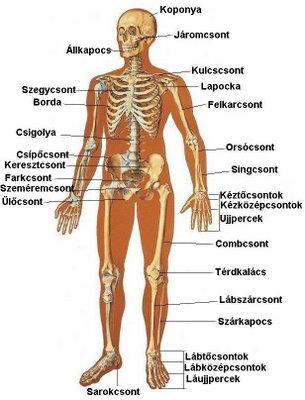 crohn-kór ízületei