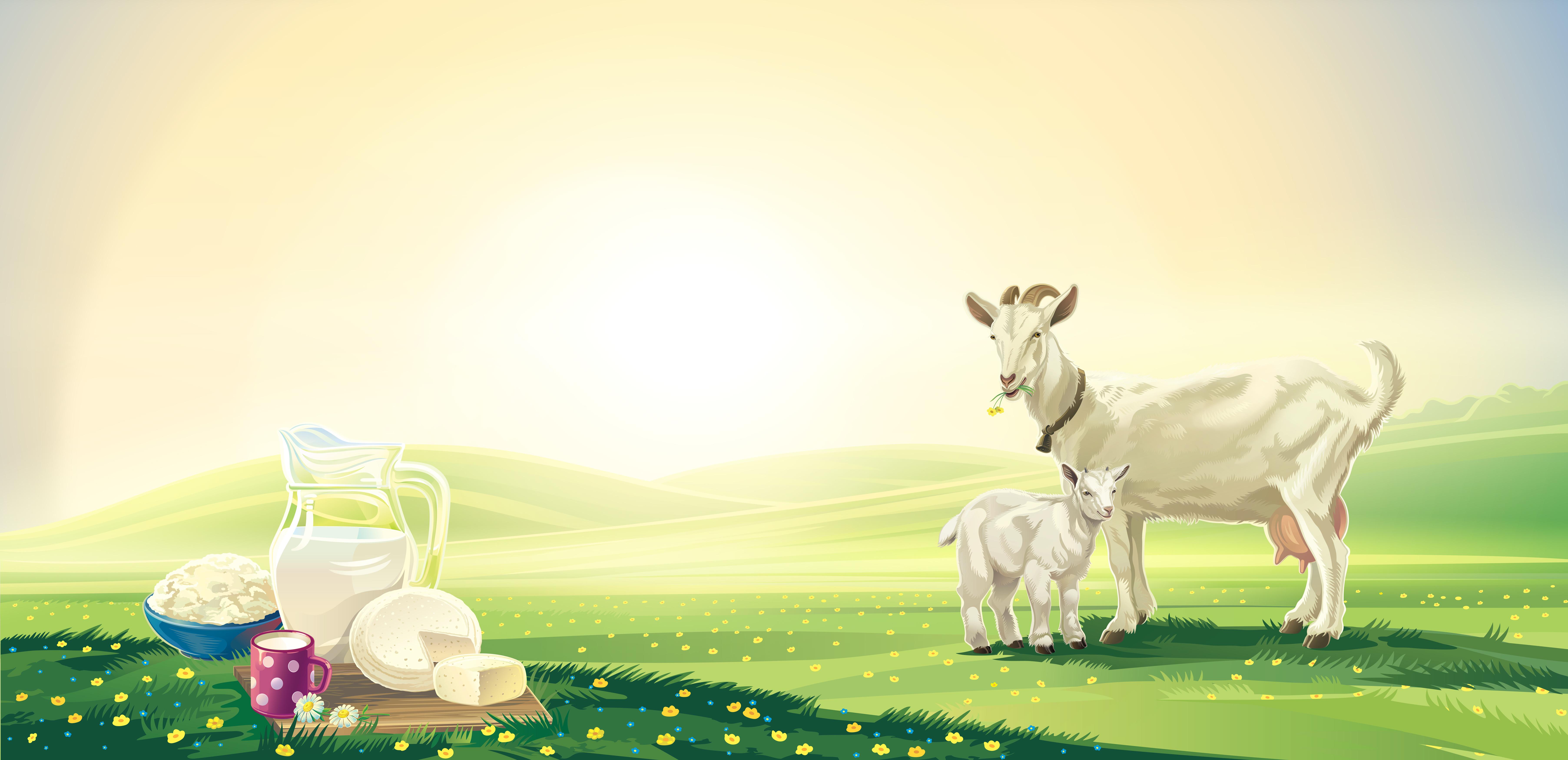 Fertőz a kecsketej?