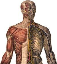 A flossing terápia hatékonynak bizonyult a boka dorzálflexiós mozgásterjedelmének növelésében