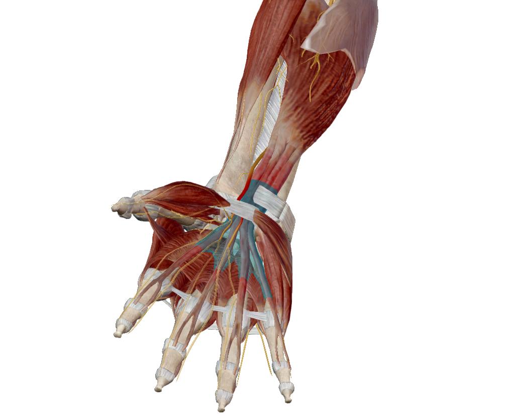 a könyökízületben lévő kar hosszú ideig fáj