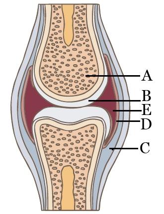 térd osteoarthrosis kezelése modern mágneses lézeres terápiás eszközökkel
