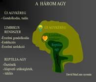 artrózis megnyilvánulása az ecsetkezelésen