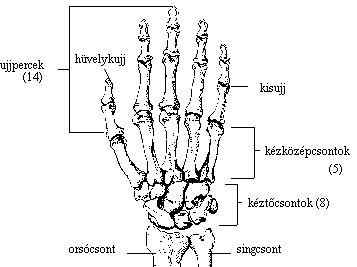 könnyező fájdalom a kéz ízületeiben boka okozta boka fájdalom