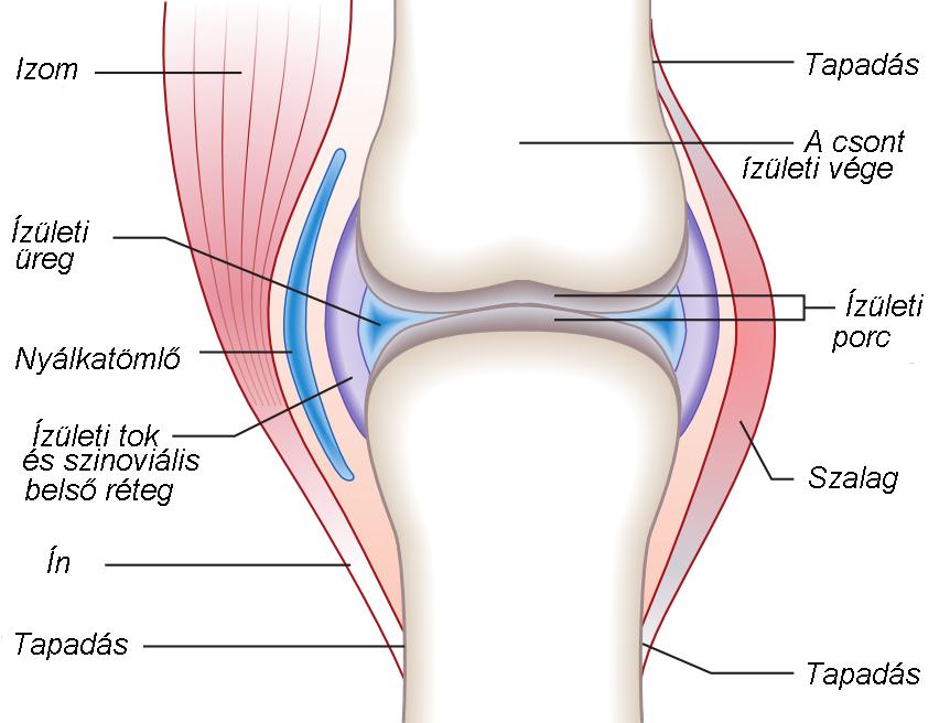 a térd posztraumás artrózisának kezelése)