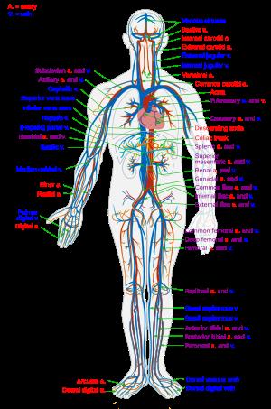 melyik mikroba okozza az ízületek gyulladását