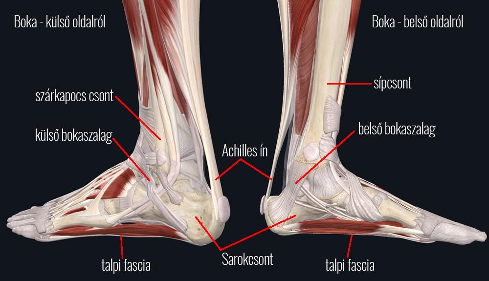 Achilles-ín fájdalma