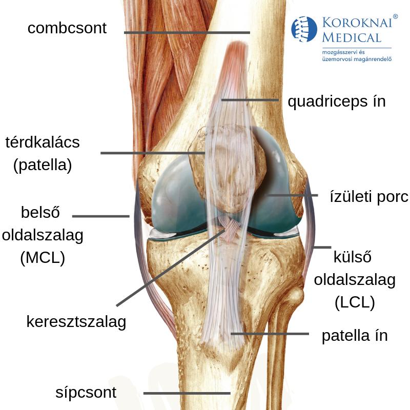 fájó ízület a bal lábon a térd alatt