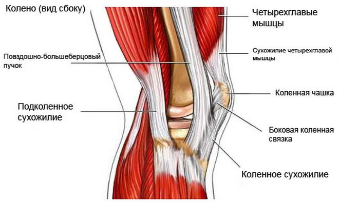 fájdalom a térdízületek izmainak ragasztásában ízületek fül közelében