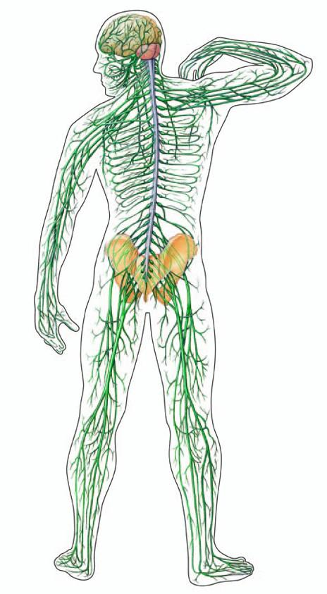 szövődmény érzéstelenítés utáni ízületi fájdalom