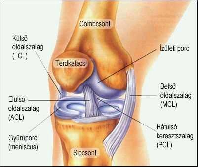 térd deformáció artrózissal lábujjak jelentése