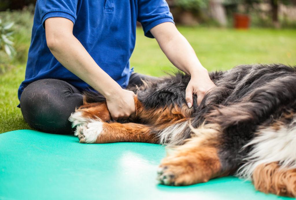 Ezt tegyük, ha a kutyánknál ízületi problémára utaló tünetet észlelünk