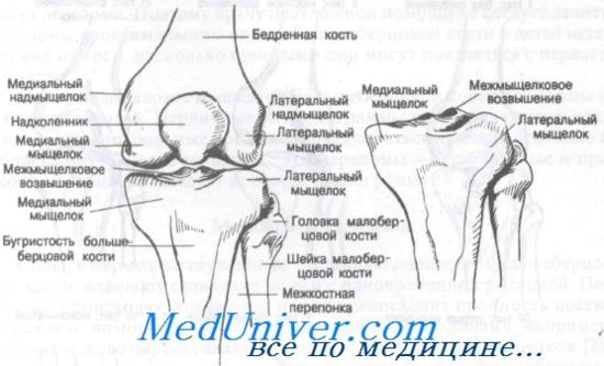 gyógyszerek, amelyek erősítik a kötések és ízületek porcát)