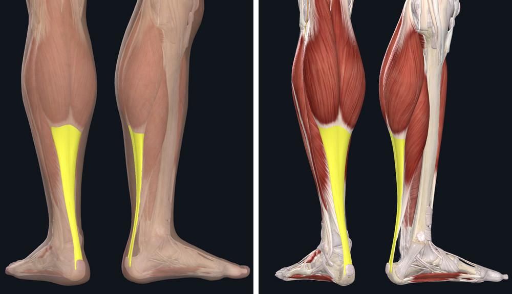 izomfájdalom a lábak ízületeiben