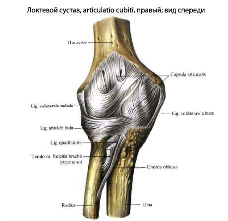 deformáló könyökízület osteoarthrosis súlyos fájdalom a bokaízület kezelésében