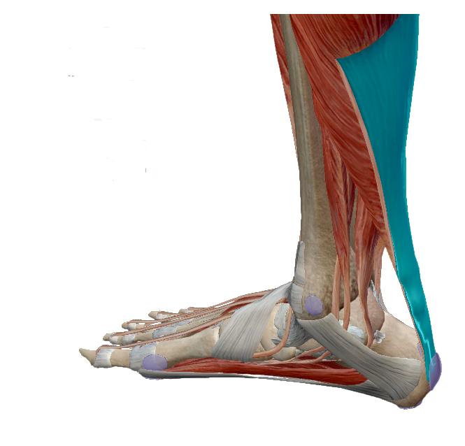 Fontos kérdések a csonttörés gyógyításáról