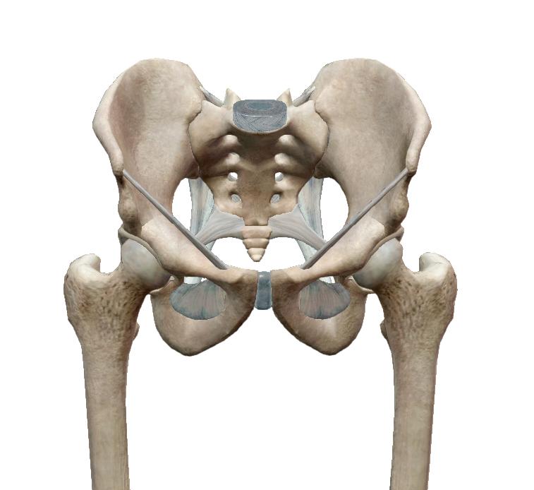 csípőfájdalom születéskor