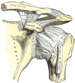 clavicularis arthritis)